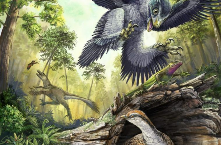 Fossil teeth show what saved bird ancestors from extinction