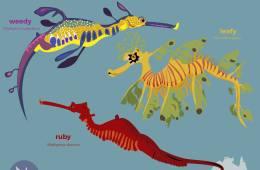 Meet the Seadragons - Biosphere Magazine