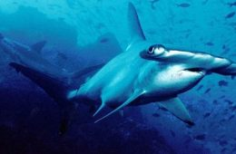 Galapagos home to largest shark biomass
