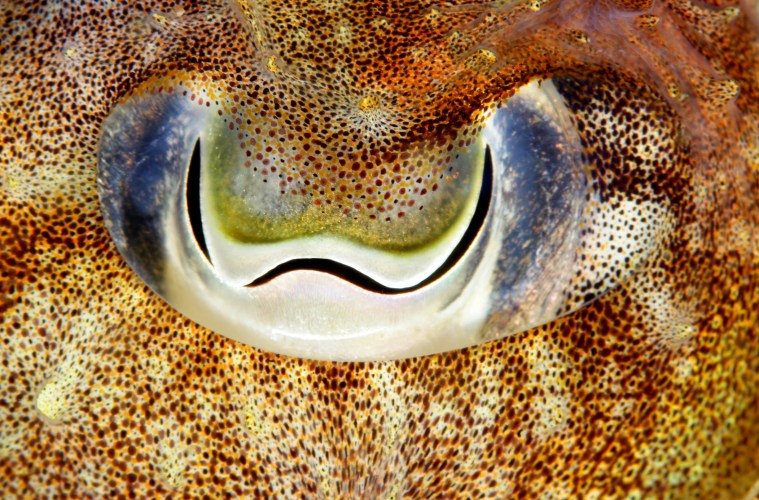 Cephalopod populations booming
