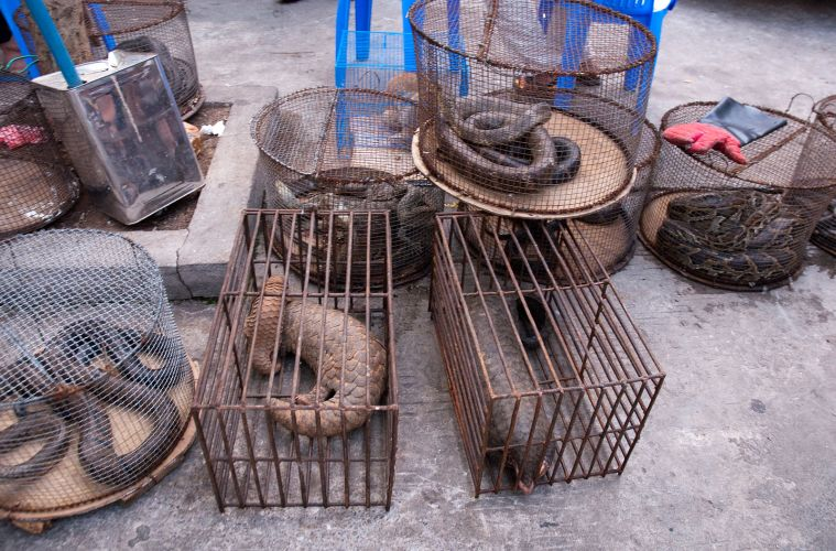 myanmar_illicit_endangered_wildlife_market_04