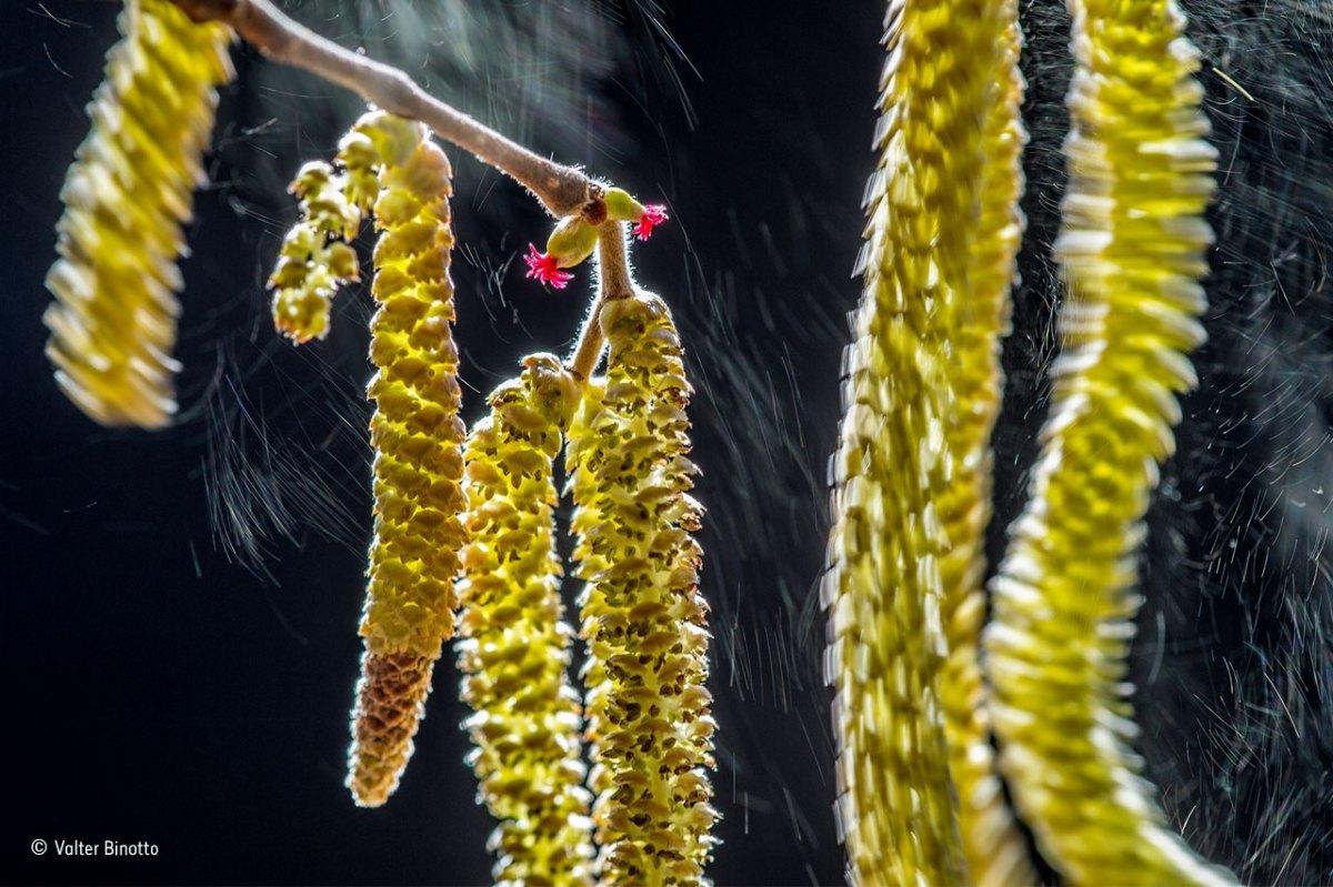 valter-binotto_wildlife-photographer-of-the-year-plants-winner
