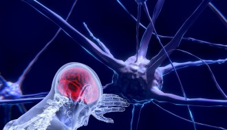 Mental strength; the brain and neurons
