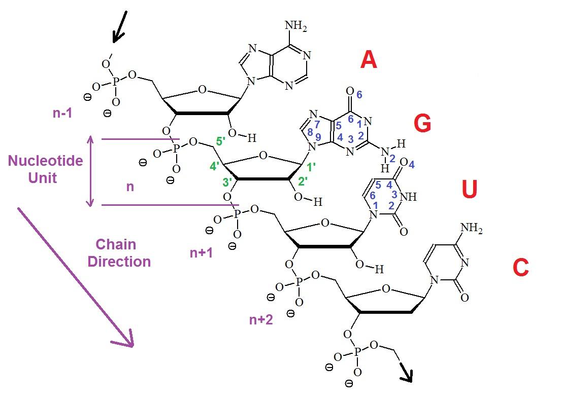 Naming Acids Diagram