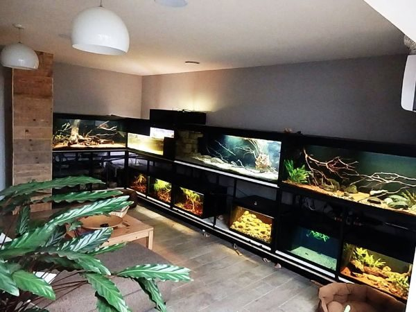 Fishroom Filed With Biotopes