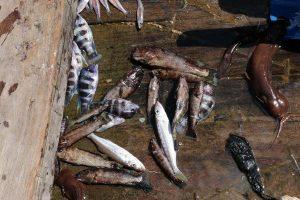 Tanganyikan Fishermen