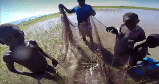Hans van Heusden netting fish in Lake Rukwa, Tanzania.