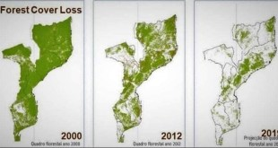 The whole world is suffering from deforestation.