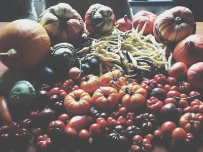 Tomaten, Kürbisse, Zucchini, Bohnen, Habaneros die Ernte eines Tages