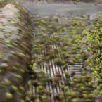 Απόβλητα Ελαιοτριβείου: Χαρακτηριστικά και Διαχείριση