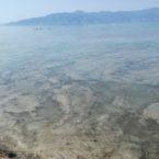 Φυτοπλαγκτόν στις ακτές κολύμβησης. Φυσιολογικό φαινόμενο που δεν εγκυμονεί κινδύνους