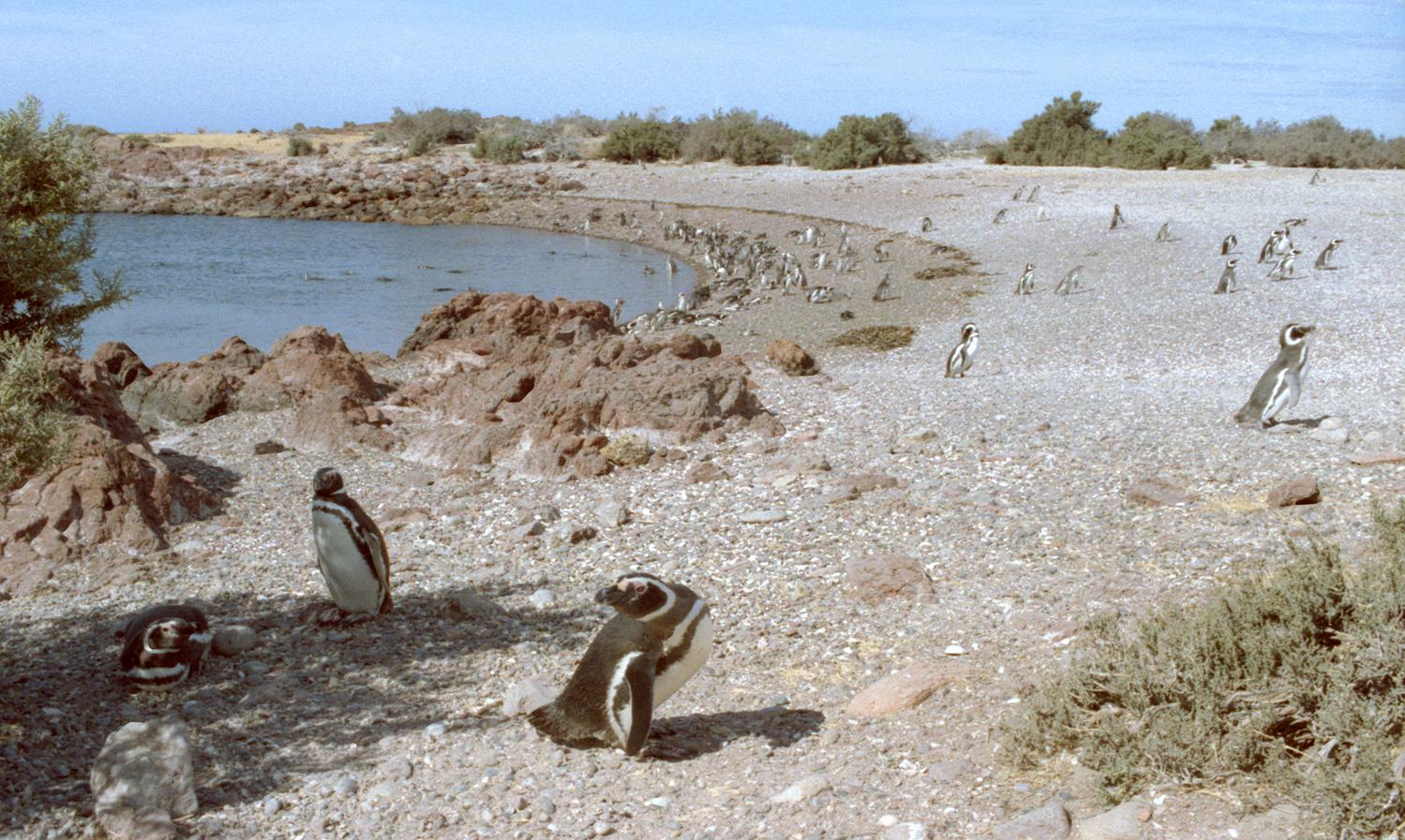 Argentina-penguin-beach