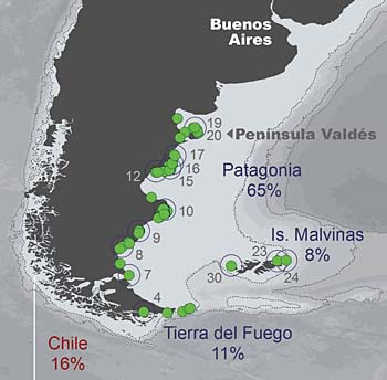 Magellanic penguin nesting places, Argentina and Chile