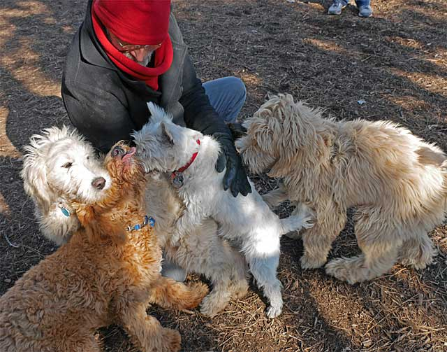 puppies surround human