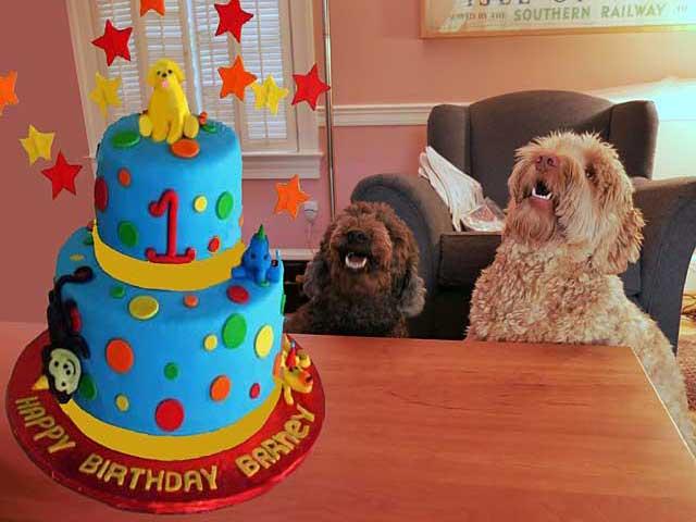 imaginary 1st birthday cake for dog