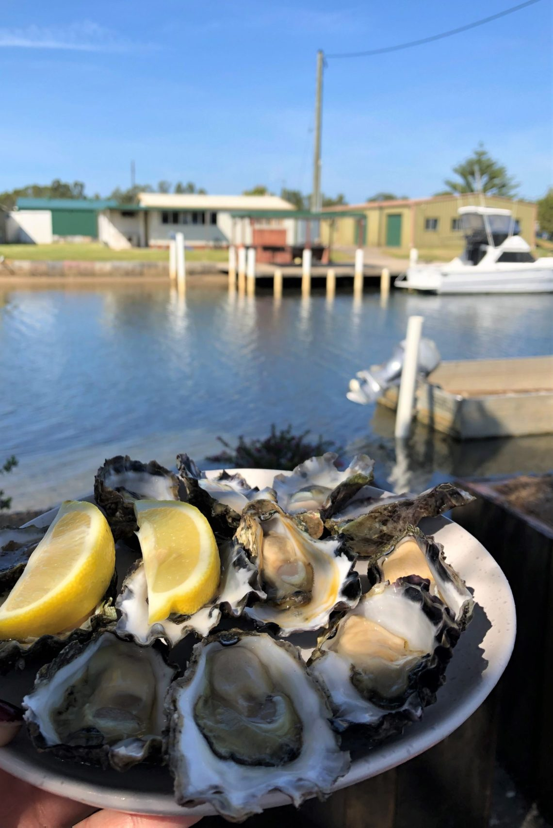Oysters, Shoalhaven