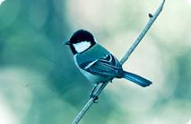 バードリサーチ / Bird Research