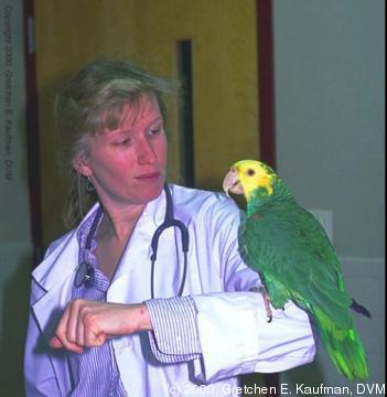 Gretchen E Kaufman, DVM with double yellow head Amazon on arm