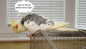 Egads, ants are in my bird's cage & how the heck can ants be good for a bird?