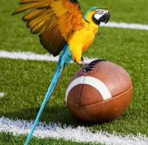 How defense wins football games & saves parrots
