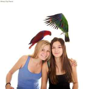 My Bird / Your Bird – Break Up Decisions and Creating the Blended Family With Parrots