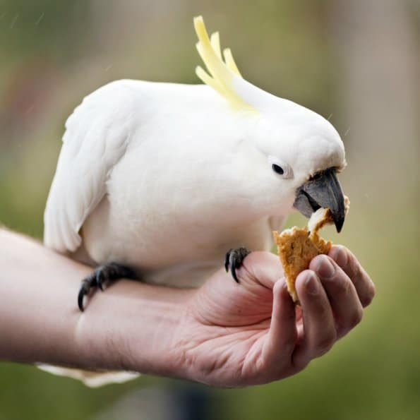 Can My Bird Safely Eat People Food?