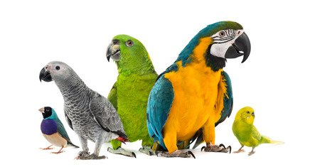 The Truth Is You Are Not The Only Person Concerned About What Are The Pros And Cons Of Having A Pet Bird?