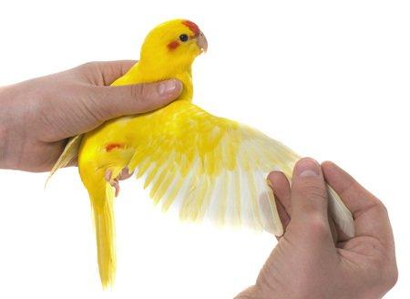 60 Nasty Household Hazards Birds Shouldn't Be Around