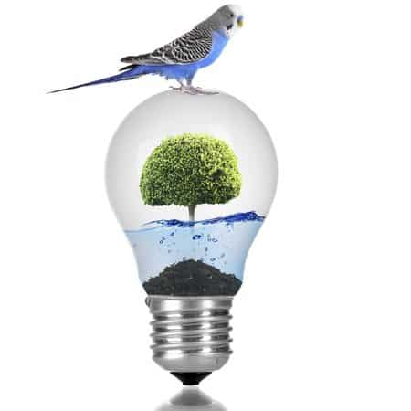 budgie on top of clear light bulb containing a tree in blue water