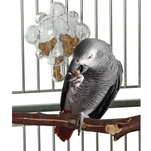 african grey in cage in front of mechanical foraging bird toy