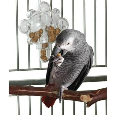 African grey parrot eating pellet bird food in front of a mechanical bird foraging toy