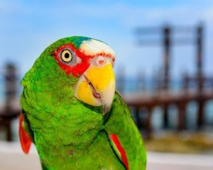 How do amazon parrots use light to synthesize Vitamin D having no preening gland? and other captive Amazon care questions