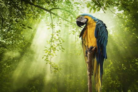 Blue and gold Macaw parrot and Rays of sunlight on Green Forest