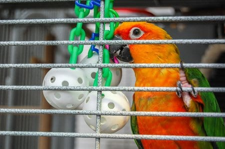 https://www.birdandparrot.info/blog/2010/04/14/bird-toys-free-cheap/
