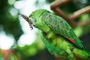 For Your Bird's Health: Gas Heat, Bugs And Muscular Atrophy In Bird Legs