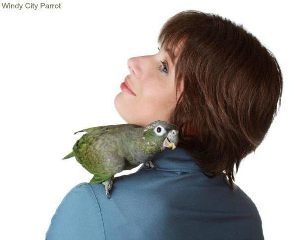 woman with pionus parrot on shoulder