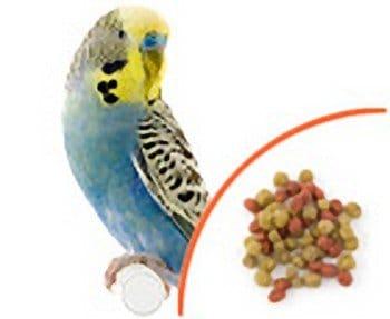 allprem scenic bird food