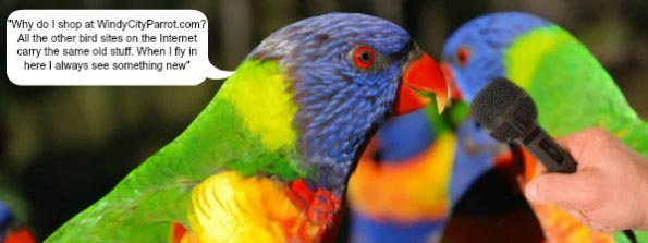 lorikeet speaking into a microphone