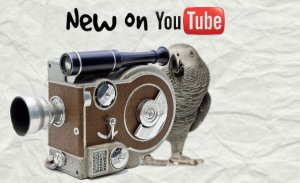 12 YouTubers For Parrot Lovers You Need To Know