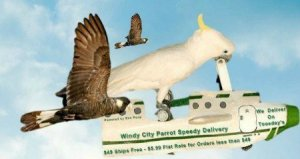 Windy City Parrot Shoppers Guide