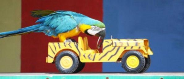 Windy City Parrot Return Policy