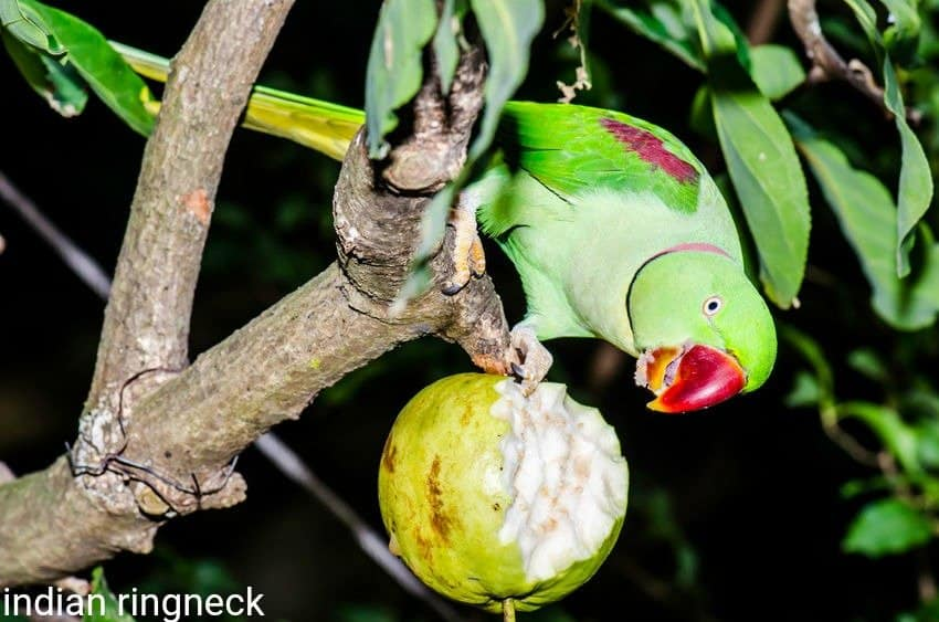 5 Answers To Questions Affecting A Parrots Domestic And Native Environments