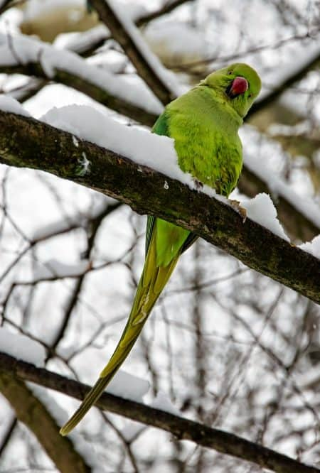 Best Practices for Heating an Outdoor Bird Aviary