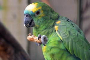 Video Reviews For Every Blend Of Goldenfeast Bird Food
