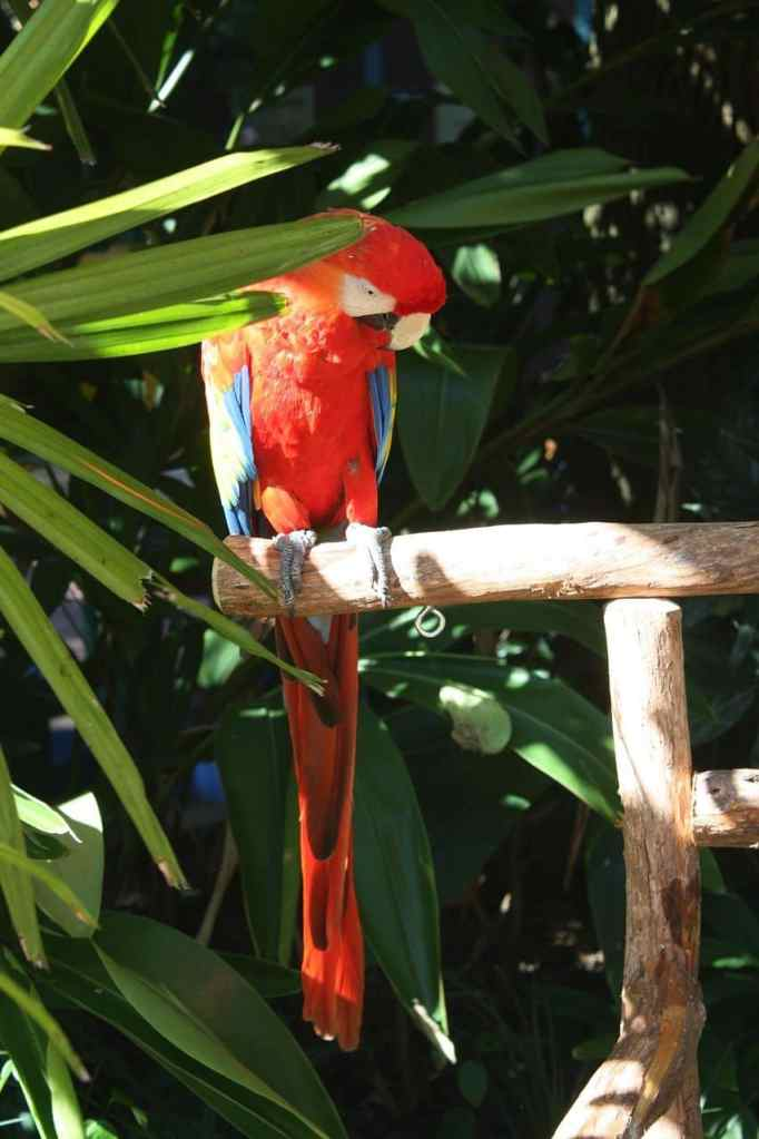 Macaw parrot partially shaded by palm tree on perch