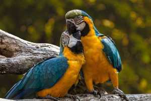 How do we know parrots enjoy anything?