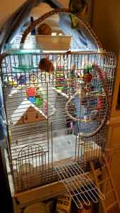 Play Top Bird Cages vs. Dome Top Bird Cages vs. Flat Top Bird Cages