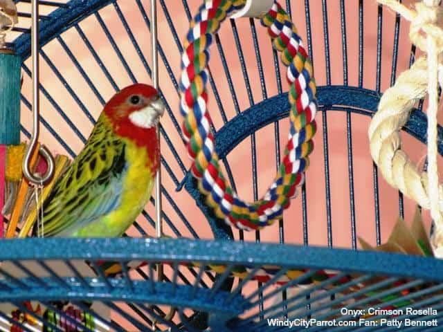 Where to Put a Swing & How to Get a Bird Used to It