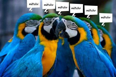 sevearl blue & gold macaw parrots with comic bubbles over their heads with the name mitchr