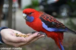 Birds can be difficult when trying new foods